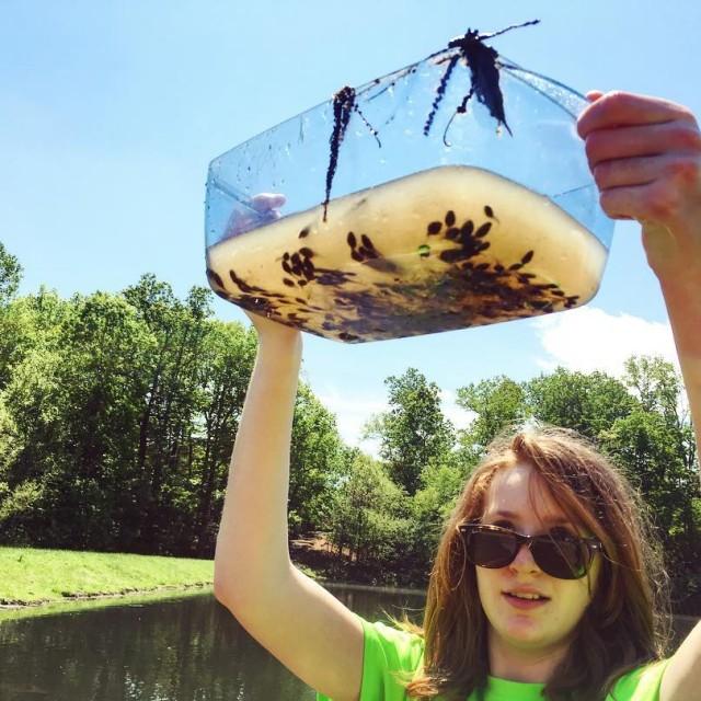 Tadpoles galore! homeschool tadpoles