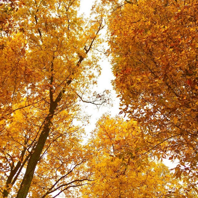 The colors this fall are amazing fall fallinvirginia virgina treeshellip
