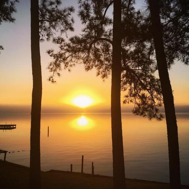 Sunrise through the pines over the Pungo River sunrise pinehellip
