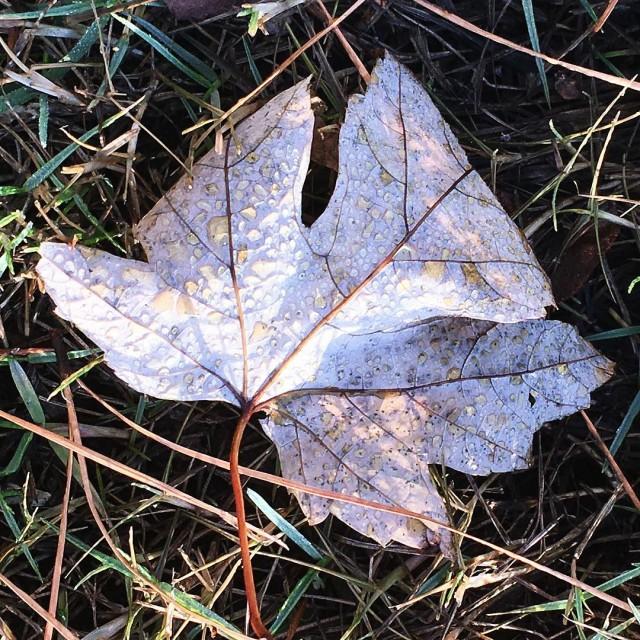 leaf leaves jjjustleaves dew