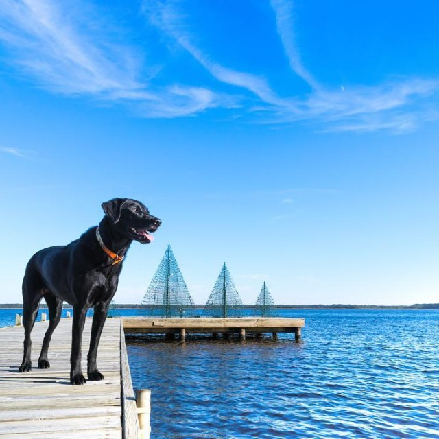 Who is ready for December?? belhaven nc clpicks coastalliving slpetshellip