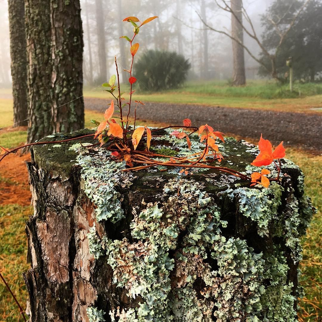 A little color on a foggy morning walk yesterday